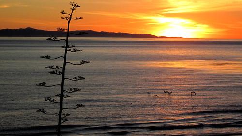california sunsets pacificocean thesea channelislands lamer dasmeer venturaca