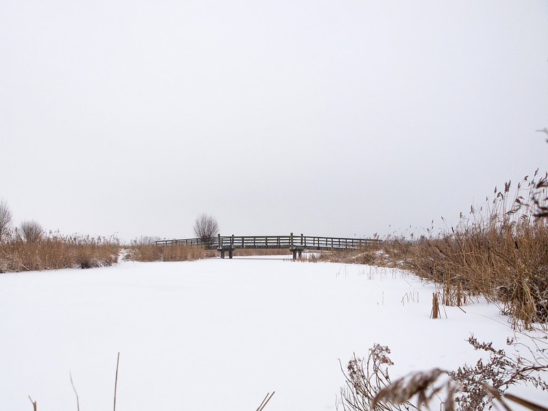 Winter in the Netherlands 3