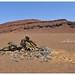 Namibia (35)