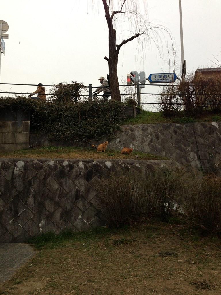 京都川端通り