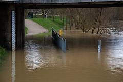 La Seille - Pont Lothaire - 2,67m