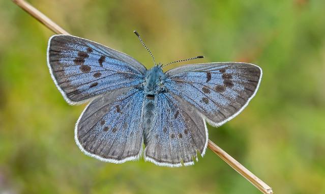 DSC3240  Large Blue..