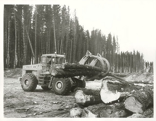 Iwitahi Forest. A 250hp. Hydraulic Log Handing Machine stacking Pinus Radiata logs ready for loading onto trucks in the Iwitahi Forest.