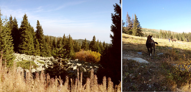 Vitosha hiking in the fall