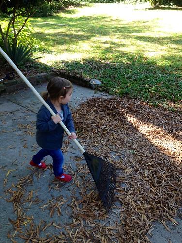 lucy raking 1
