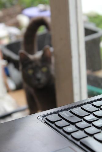 cat visitor