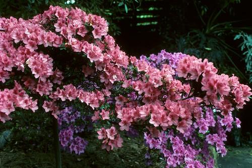 Perennials_022
