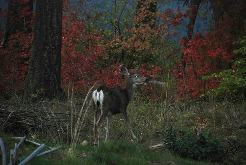 autumn sunset fall deer wa roslyn suncadia