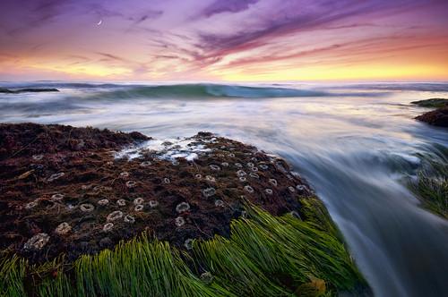 ocean sunset sea sky moon seascape water colors clouds fire coast rocks pacific air tide crescent coastal anemone reef uwb lajollawater