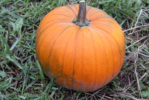 pumpkins-2012-3