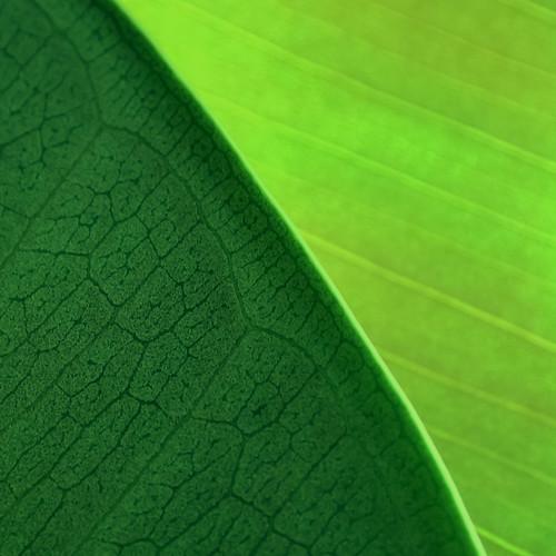 Nature Patterns 04