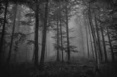 [フリー画像素材] 自然風景, 森林, 霧・霞, モノクロ ID:201210291600