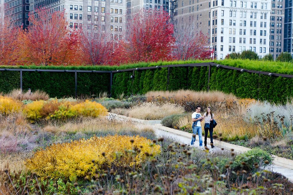 Millennium park the lurie garden landscape voice for Piet oudolf fall winter spring summer fall