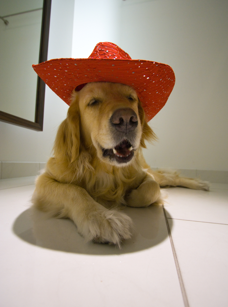 Bang Howdy Partner!