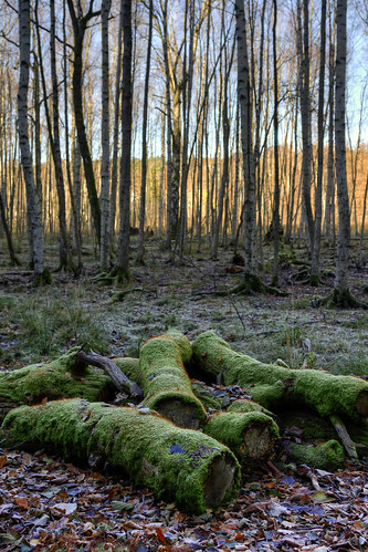 wood trees forest moss