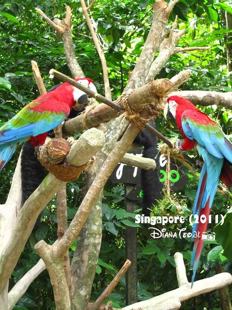 Day 3 Singapore - Zoo Singapore 02