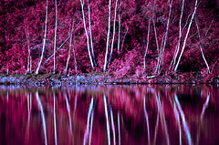 reflection red