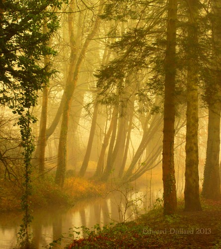 trees kilkenny ireland light irish mist painterly nature fog river landscape licht canal stream atmosphere eire photoart emeraldisle irlanda ierland leinster irlandia canon5d11 rememberthatmomentlevel1 me2youphotographylevel1