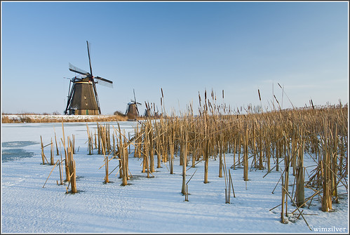 Kinderdijk this week!