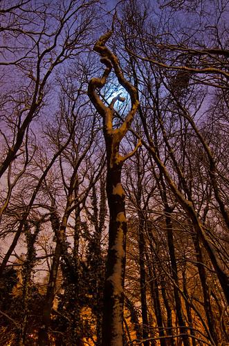 longexposure trees forest nikon hertfordshire stalbans sceptre beechbottomdyke tokina1116 celticbritain nikond7000