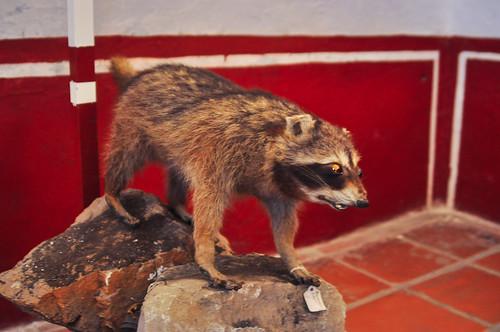 Museo del Valle de Tehuacán (31)