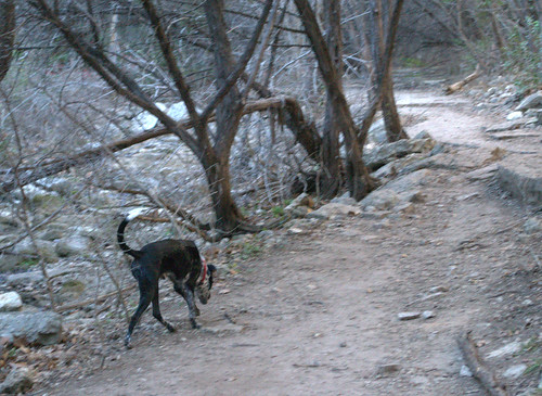 Dog hiking 002