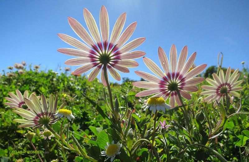 Postberg Flower Reserve