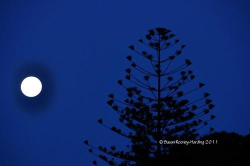 ocean beach sunrise adelaide southaustralia glenelg supermoon