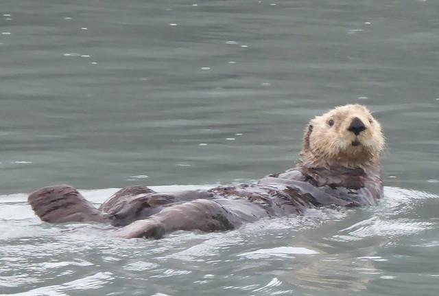 Otter study II