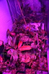最佳led植物生長燈-食蟲植物