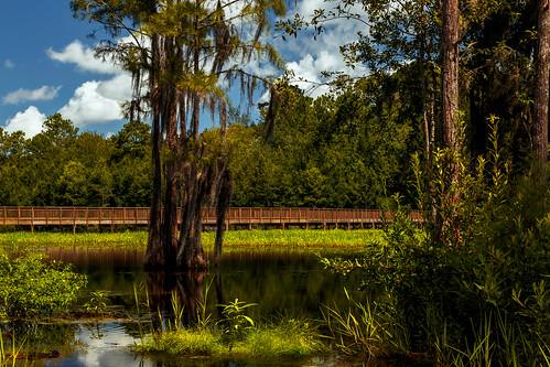 lauraswalkerstatepark waycross georgia unitedstates us trees swamp marsh spanishmoss moss clouds canonef24105mmf4lisusm