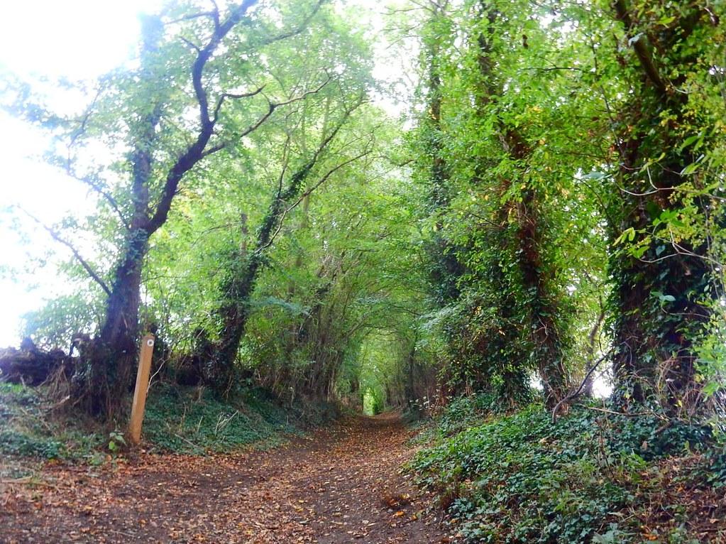 Green Bridleway St Margarets Circular