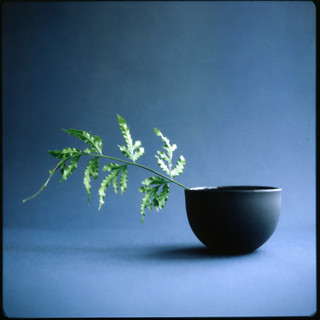 bowl and fern