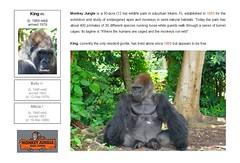 Gorilla: King