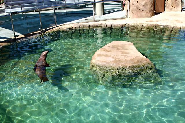 Tulsa Seal Exhibit