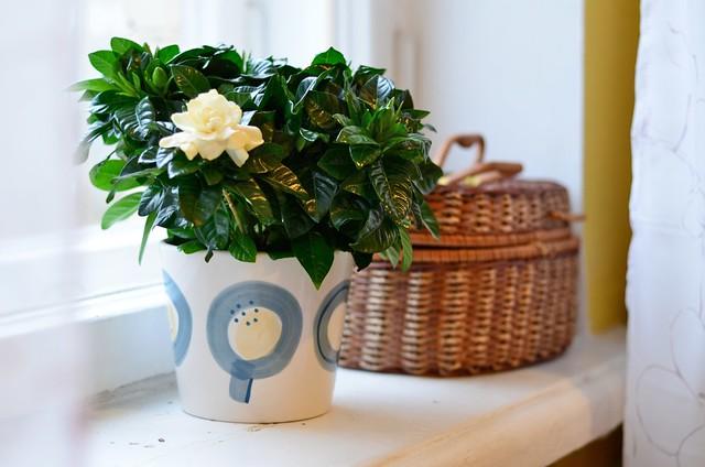 Комнатные цветы которые пахнут