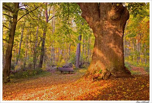 nature forest 35mm landscape natur mm 35 landschaft wald eichsfeld worbis afsdxnikkor35mmf18g