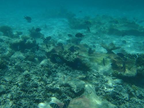 Snorkelling (1)