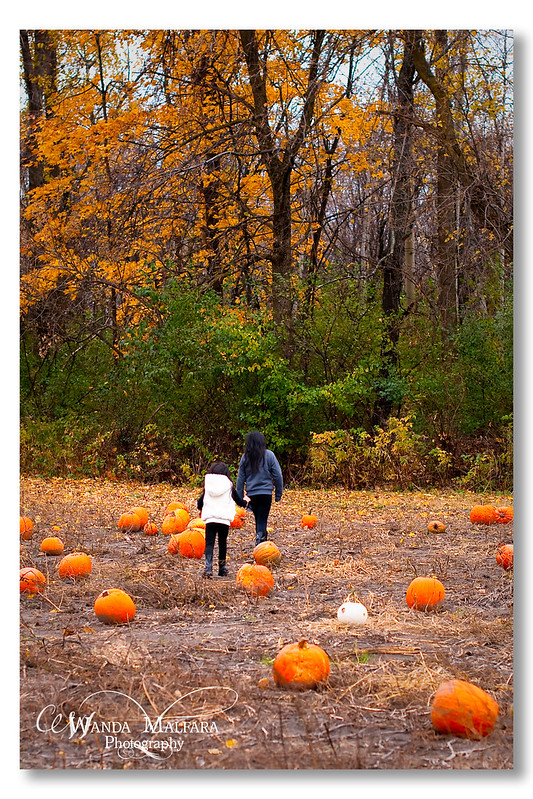Pumpkin Patch 2012 014 wm