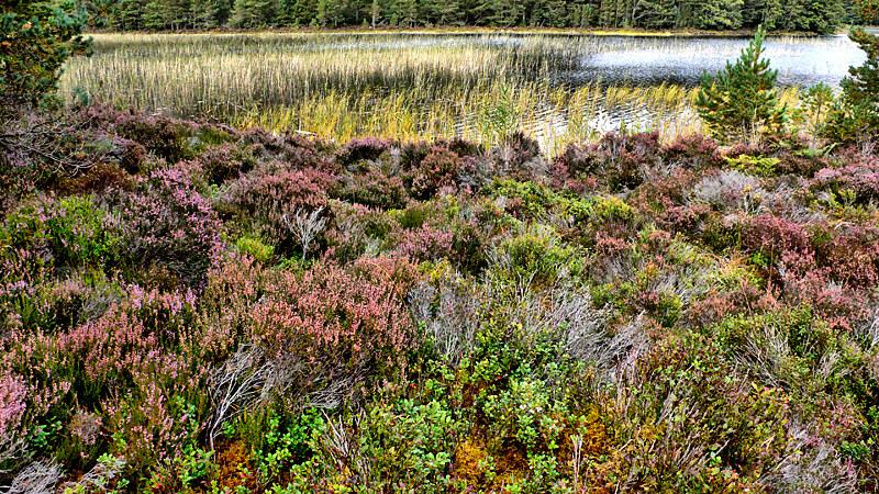 Lakeside Flora