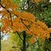 288 - Autumnal