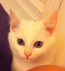 Foster kitty - Neelix
