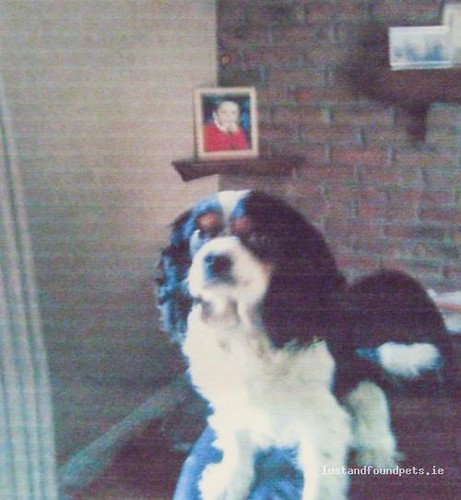 Mon, Sep 17th, 2012 Lost Male Dog - Carrigeen, Kilkenny