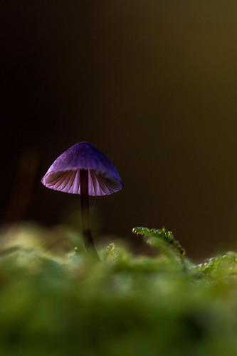 Paars dakje by eosfoto