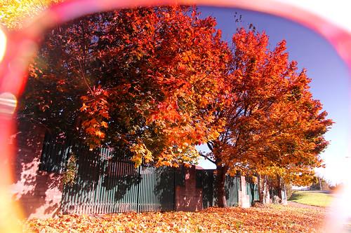 Through Rose Coloured Glasses