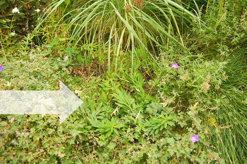 Locate Euphorbia 2