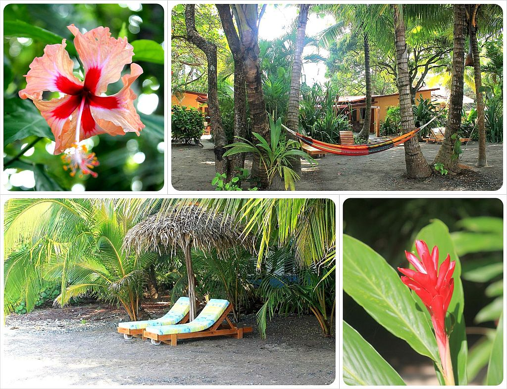 Hotel Fenix Samara Beach Costa Rica with flowers