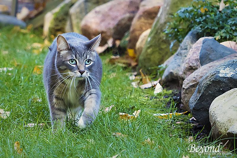Rex Prowling