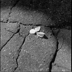 butterfly down