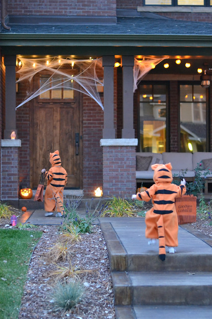 Tigers trick or treat